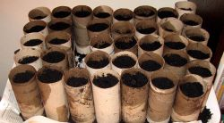 seed started in toilet paper roll