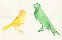 Bird Watercolors