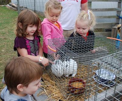 Petting the Bunnies